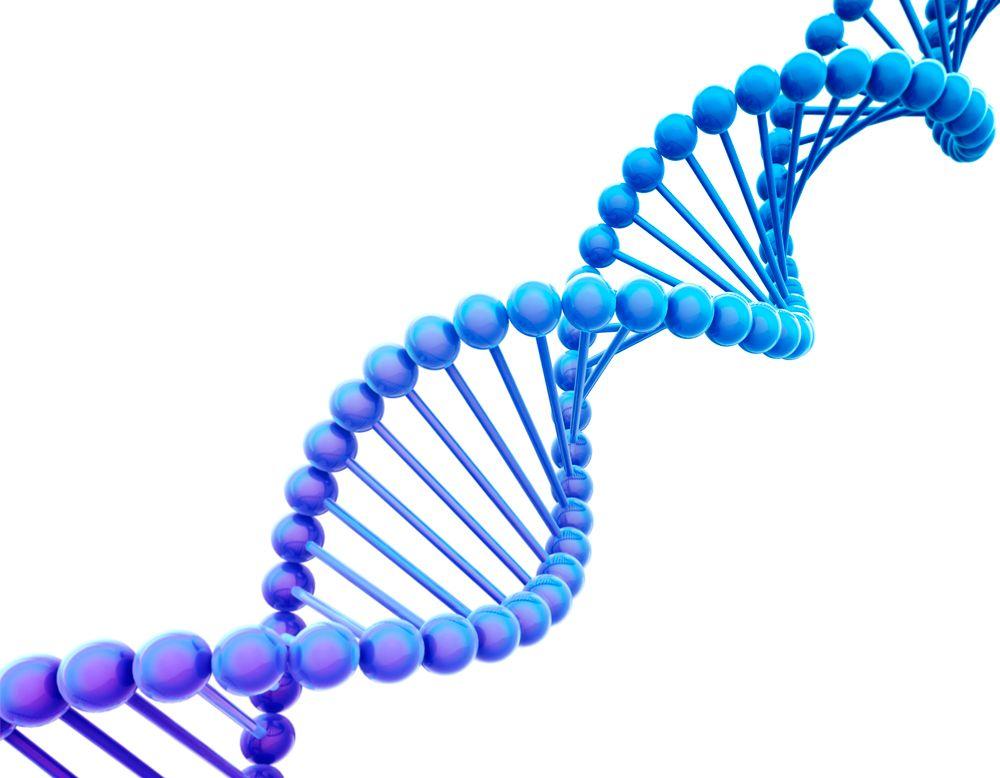 dna alimentare e nutrigenetica